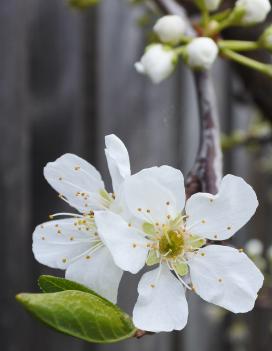 Soul Blossom
