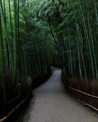Arashiyama_Bamboo_Forest_(11096493983).jpg